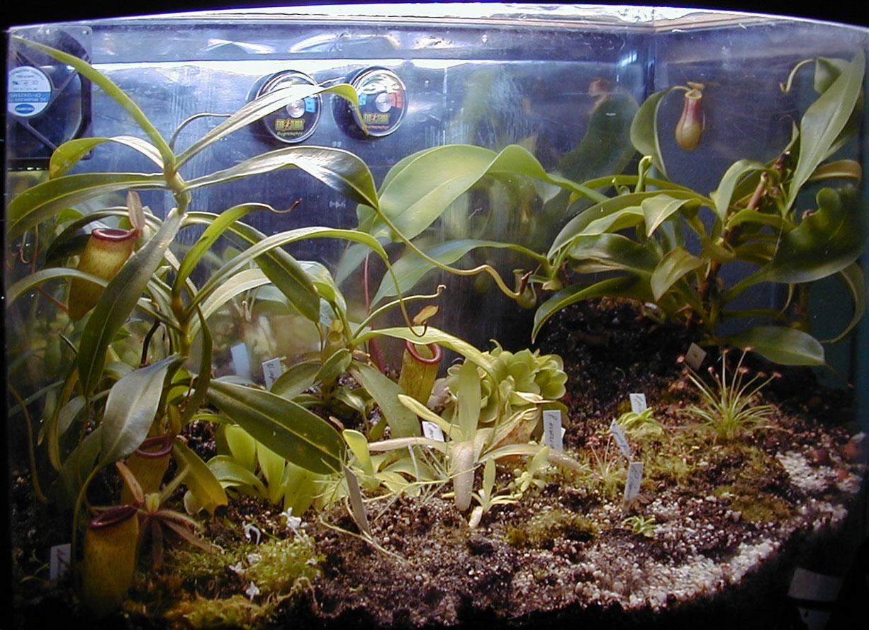 plante carnivore vivarium